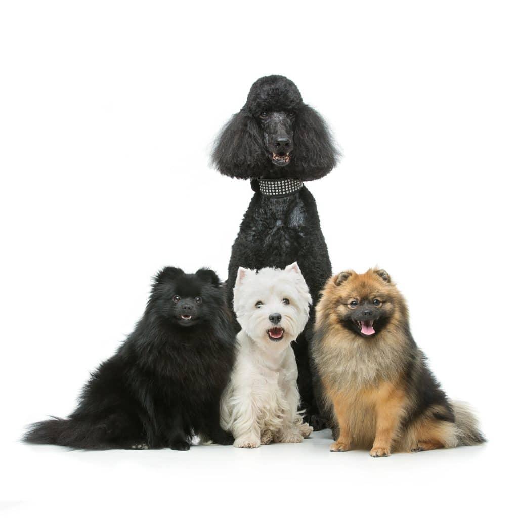 מאלף כלבים בשרון