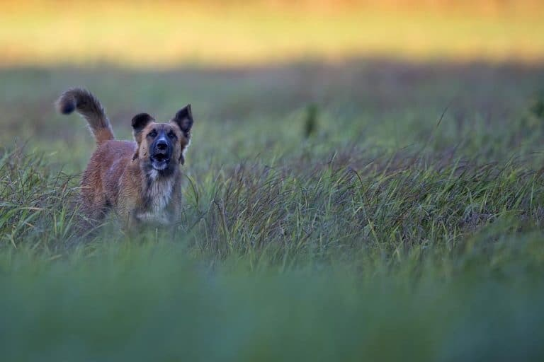 מאלף כלבים בצפון מחיר