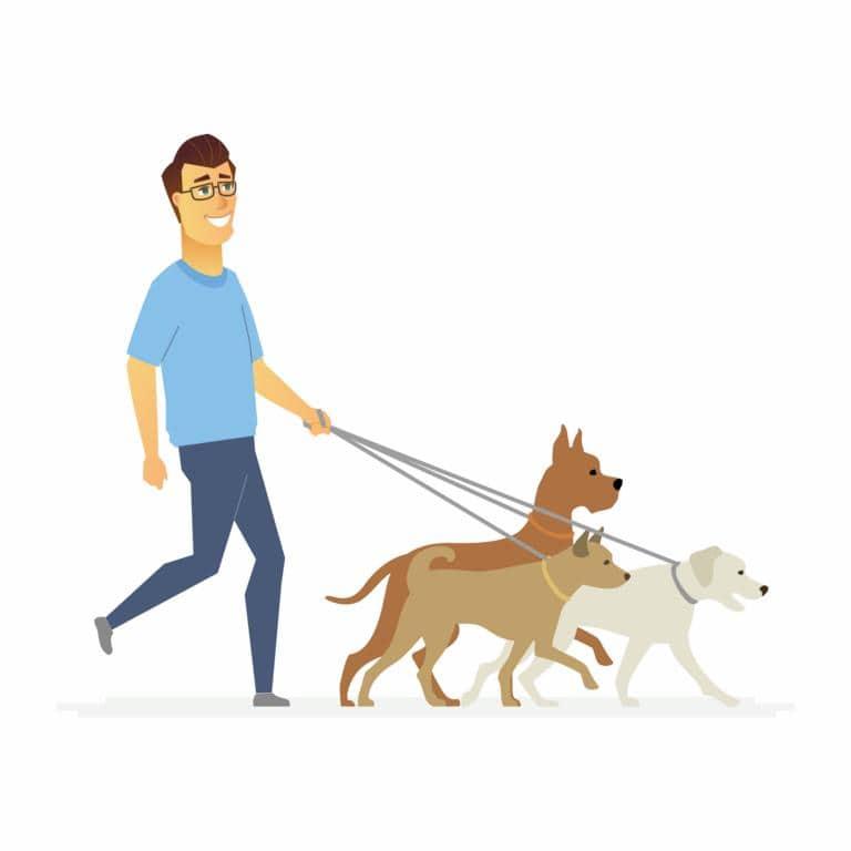 מאלף כלבים בראש העין