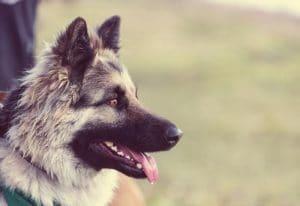 מאלף כלבים בחיפה - אילוף כלבים מומלץ