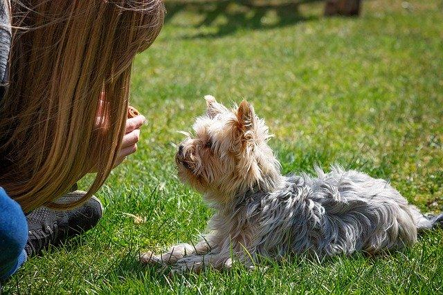המדריך לכלב הראשון - אילוף כלב קטן