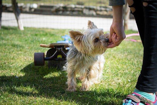 5 טיפים לאילוף כלבים - כלב קטן בתהליך אילוף