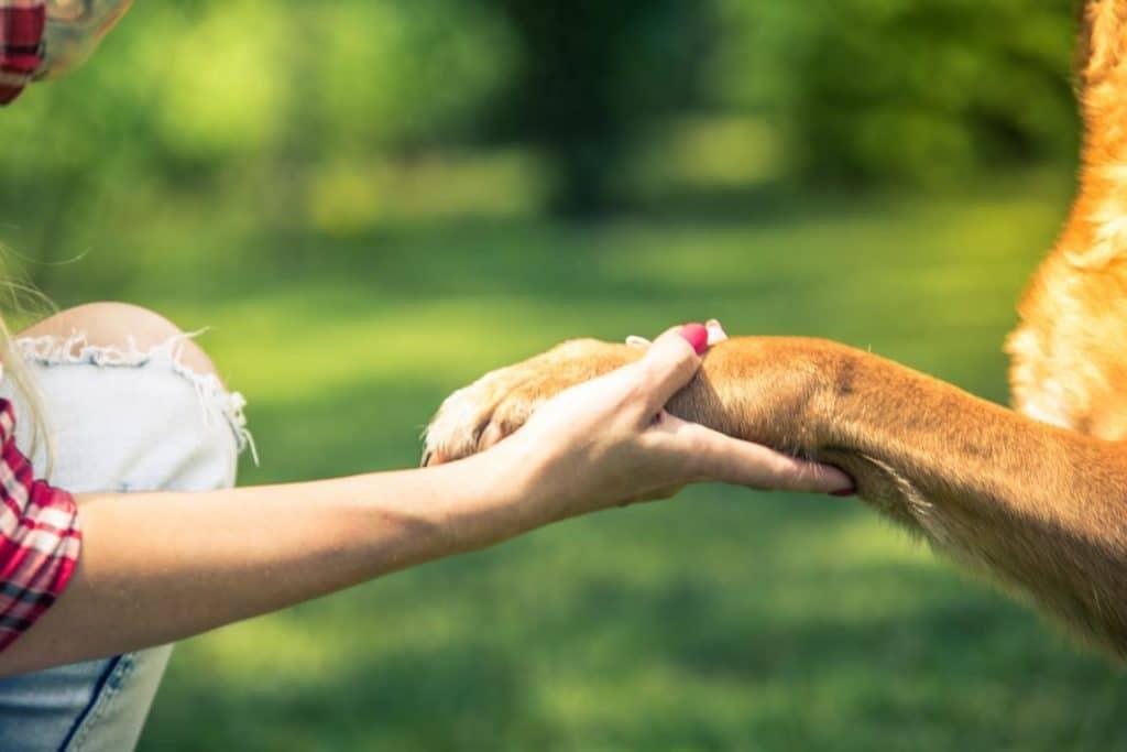 מאלף כלבים בנתניה - אילוף כלבים מומלץ