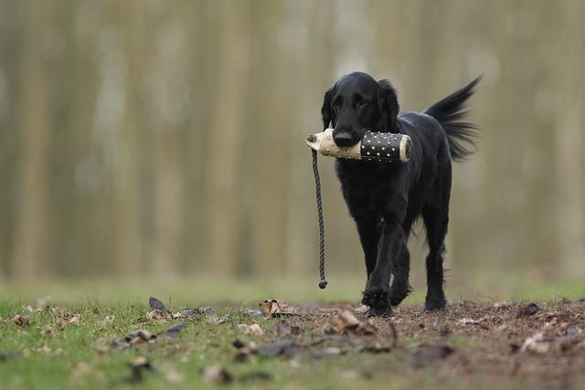 איך לאמן את הכלב לעזוב משהו - כלב עם חפץ בפה