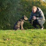 כיצד לאמן את הכלב שלך להתמקד בך