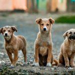 אילוף כלבים להישאר - שלושה כלבים ממתינים לפקודת הישאר