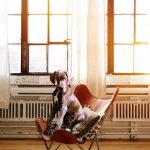 אילוף כלבים לשבת - כלב יושב על כיסא