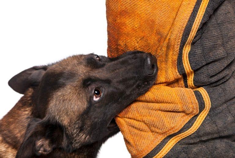 איך מאלפים כלב לא לנשוך