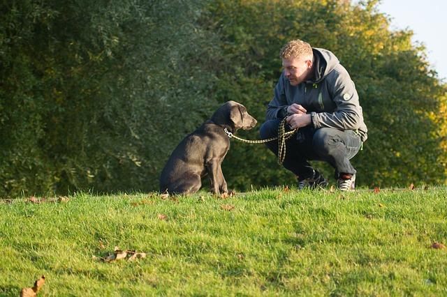 איך כלב מראה אהבה