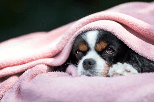 כמה זמן כלב ישן