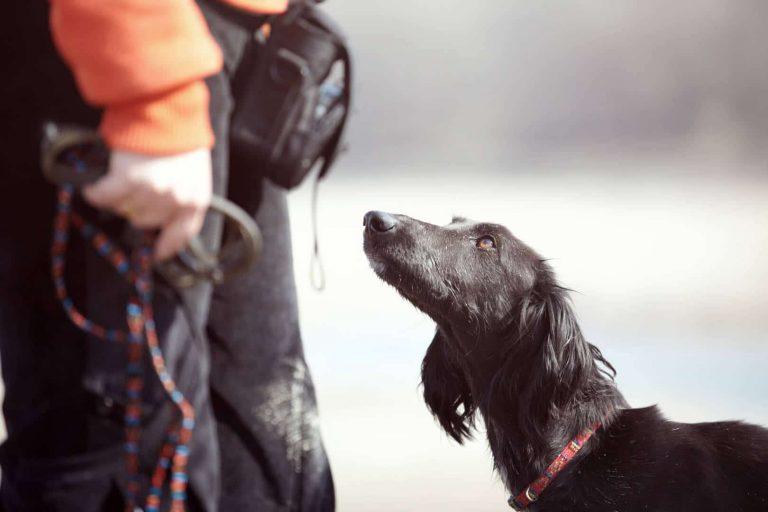 איך להעניש כלב