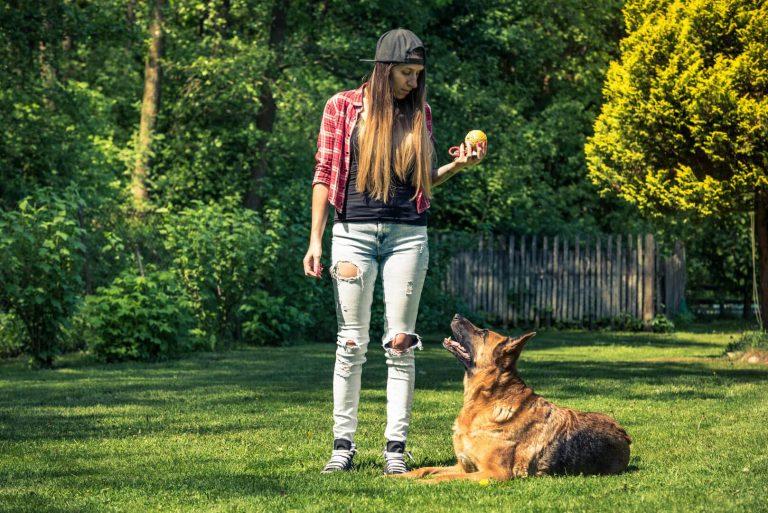 איך ללמד כלב ארצה