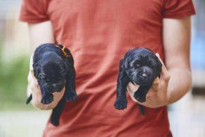 סוגי כלבים קטנים