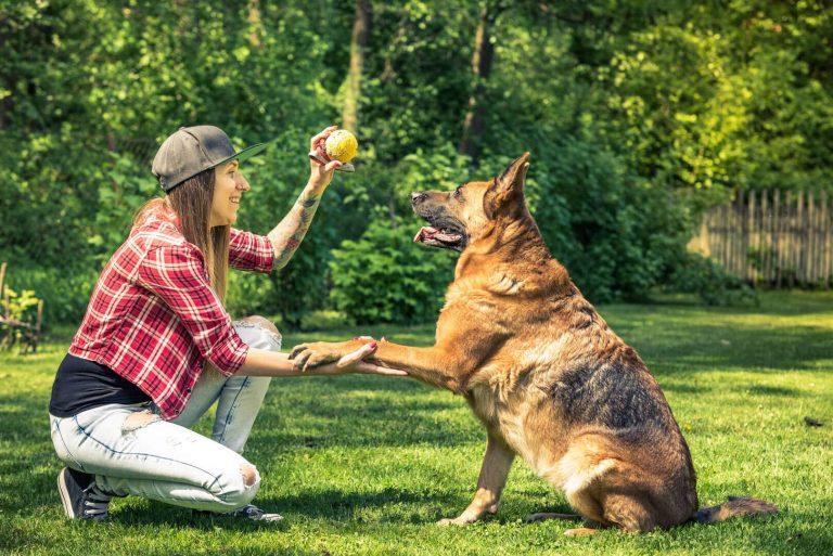 כמה זמן כלב יכול להתאפק