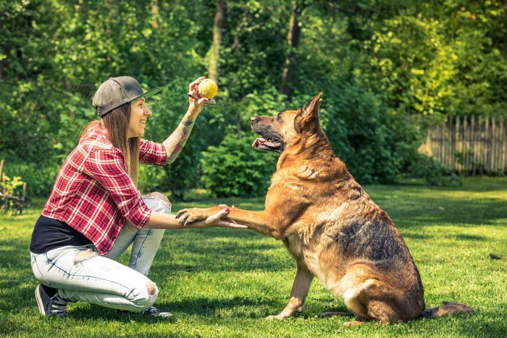 מאלף כלבים בהוד השרון